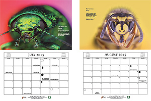 Insect Macro Calendar - July & August