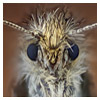 The Micro Moth - gallery shot by Johan J Ingles - Le Nobel