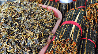 insects for sale at a Chinese market