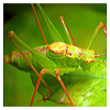 Insect photography, entomology, and photomacrography