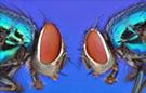Two fly macro