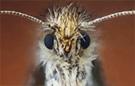 Extreme macro moth