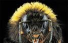 Extreme macro queen bumblebee