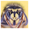 Interesting angles and points of view for macro insect photography