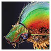 Mounting insects for scientific photography and entomology