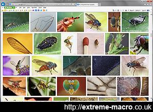 photomacrography.net images